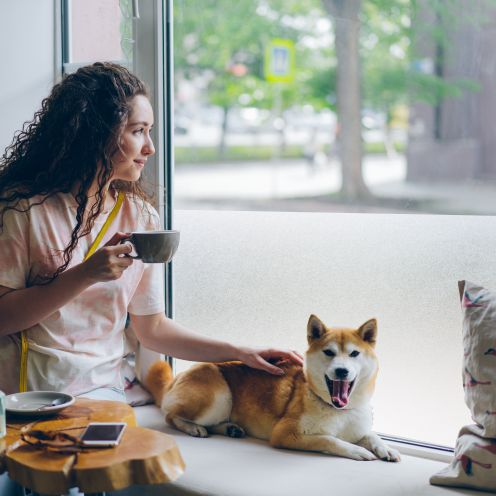 Frosted glass film to prevent a dog barking at a window