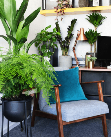 Leafy plants in cool working from home office