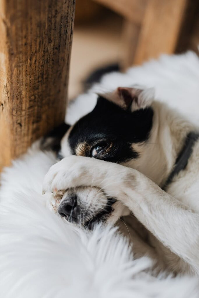 there are some things to avoid when trying to stop your dog barking