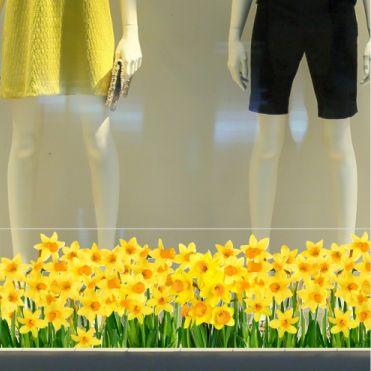 Daffodils Border Sticker