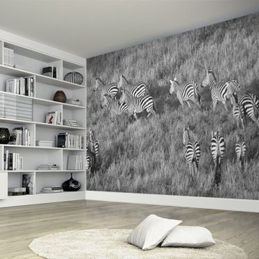 Wildlife and animal life wall murals and wallpaper Purlfrost